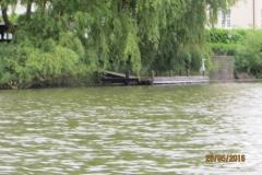 En lille hejre inde på bådebroen